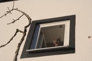 silke tauchert/fotofee-st.de/Katzen