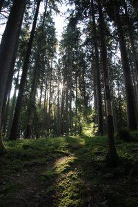 silke tauchert/fotofee-st.de/wald/allgäu/sonne/herbstlicht