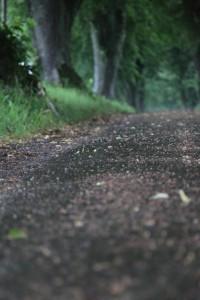 silke tauchert/fotofee-st.de/allee/bäume