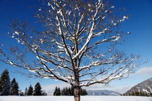 silke tauchert/www.fotofee-st.de/winter/schnee/tannheimertal
