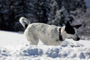 silke tauchert/fotofee-st.de/schnee/winter/hund im schnee