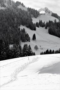 silke tauchert/tannheimertal/fotofee-st.de/winter/schnee/berge