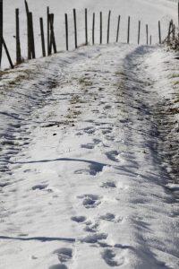 silke tauchert/fotofee-st.de/allgäu/winter/neuschnee/görisried