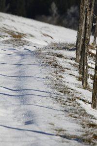 silke tauchert/www.fotofee-st.de/winter/neuschnee/allgäu/görisried