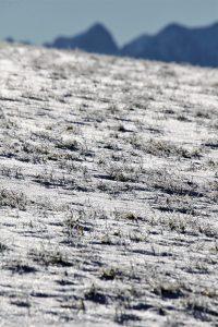 silke tauchert/www.fotofee-st.de/winter/allgäu/neuschnee/görisried