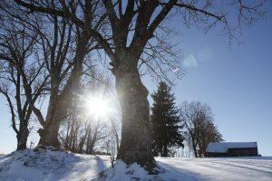 winterwonderland in der vorweihnachtszeit