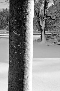 silke tauchert/www.fotofee-st.de/görisried/allgäu/winter