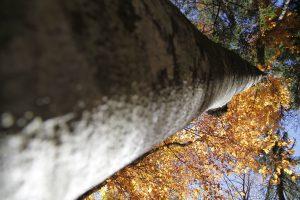 silke tauchert/fotofee-st.de7waldlichtung/herbst/goldener oktober/tannheimertal
