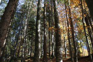 silke tauchert/fotofee-st.de/wald/lichtung/herbst/goldener oktober/tannheimertal