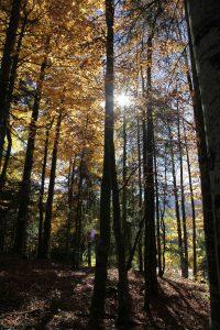 silke tauchert/fotofee-st.de/wald/bäume/buchen