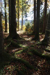 silke tauchert/fotofee-st.de/wald/herbst