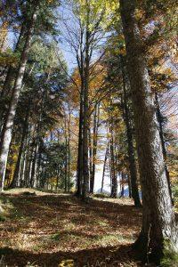 silke tauchert/fotofee-st.de/allgäu/goldener oktober/wald
