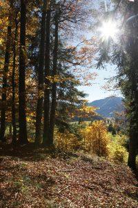 silke tauchert/fotofee-st.de/goldener oktober/herbst/wald