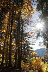 silke tauchert/fotofee-st.de/allgäu/herbst/goldener oktober