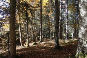 silke tauchert/fotofee-st.de/wald/lichtung/allgäu/goldener oktober