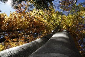 silke tauchert/fotofee-st.de/wald/allgäu/buchen/goldener oktober