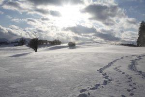 silke tauchert/wwww.fotofee-st.de/winter/schnee