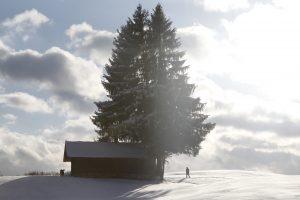 silke tauchert/www.fotofee-st.de/winter/frost