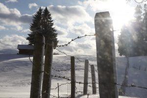 silke tauchert/www.fotofee-st.de/winter/frost/schnee/allgäu