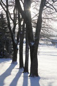 silke tauchert/www.fotofee-st.de/allgäu/frost/winter/schnee