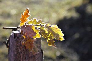 silke tauchert/fotofee-st.de/allgäu/herbst/frost