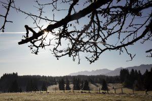 silke tauchert/fotofee-st.de/allgäu/frost/herbst