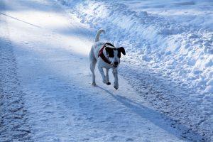 silke tauchert/www.fotofee-st.de/winter/berge/schnee/hund