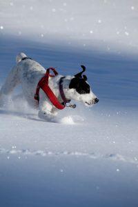 silke tauchert/www.fotofee-st.de/winter/schnee/hund